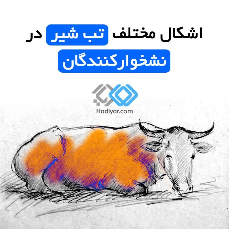 تب شیر گاو