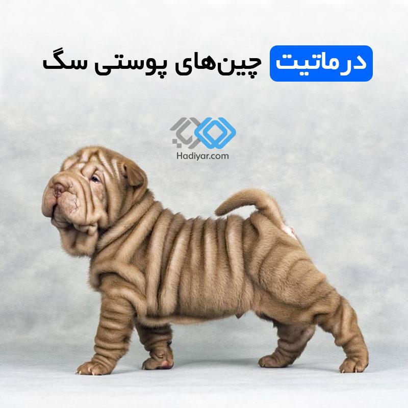 درماتیت چین های پوستی در سگ