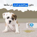 دلایل بی اختیاری ادرار در سگ ها