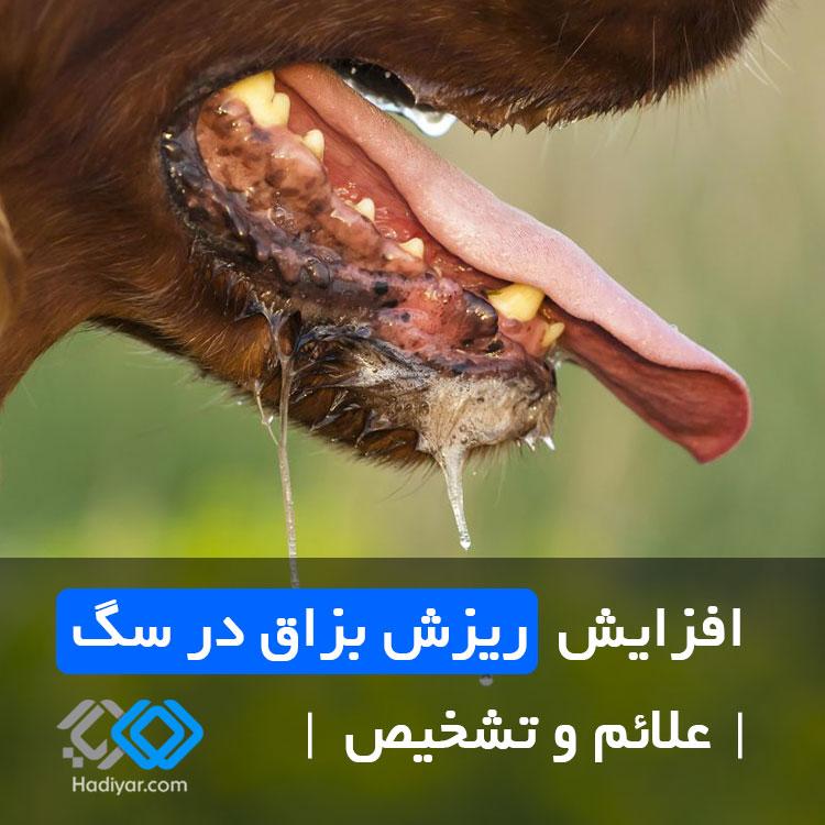 پتیالیسم در سگ ها