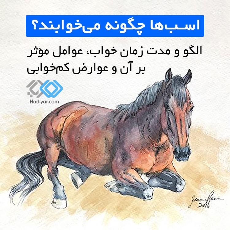 اسب ها چگونه می خوابند؟