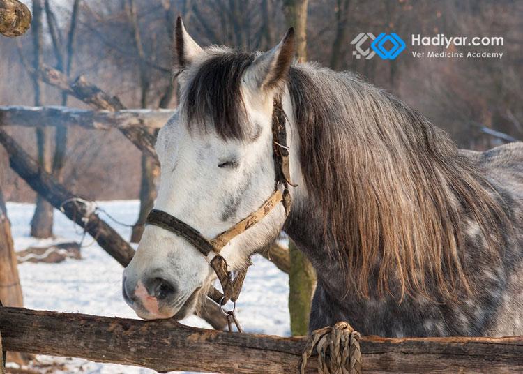 آیا اسب ایستاده می خوابد