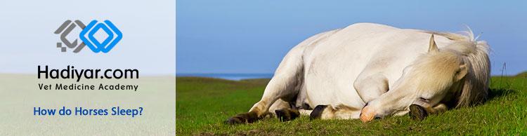 نحوه خوابیدن اسب ها