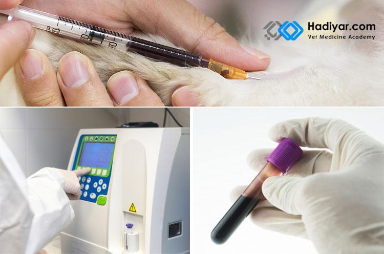 آزمایش خون در حیوانات خانگی