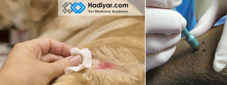 نمونه برداری از پوست حیوان خانگی