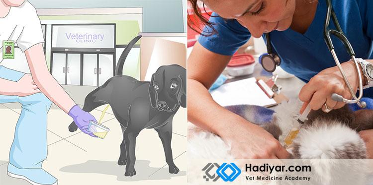 آزمایش های تشخیصی حیوانات خانگی
