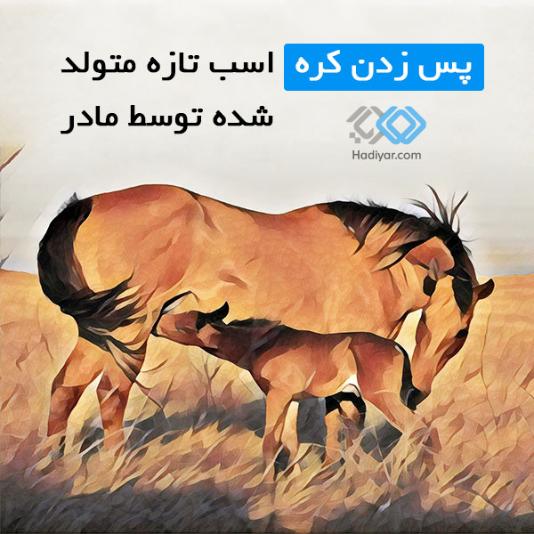پس زدن کره اسب تازه متولد شده توسط مادر