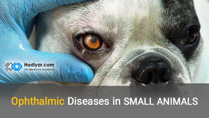 بیماری های چشم در حیوانات کوچک
