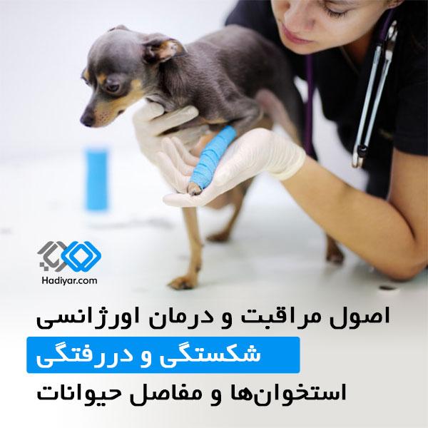 شکستگی و دررفتگی استخوان ها و مفاصل در حیوانات