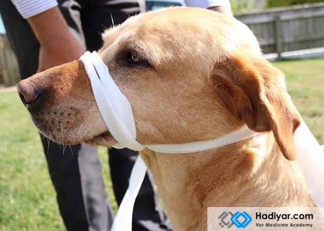 شکستگی فک در سگ