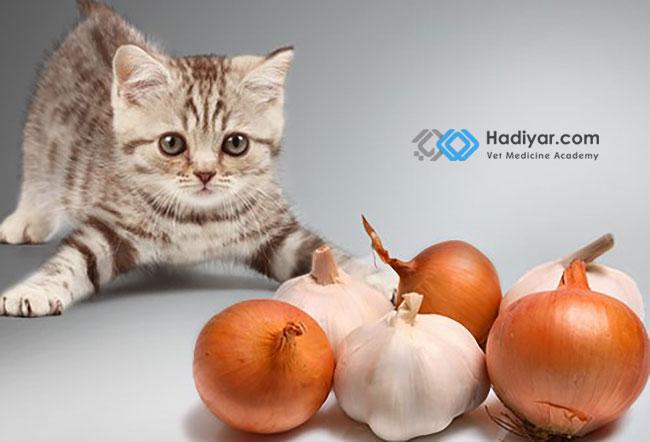 خطر مصرف سیر و پیاز برای گربه