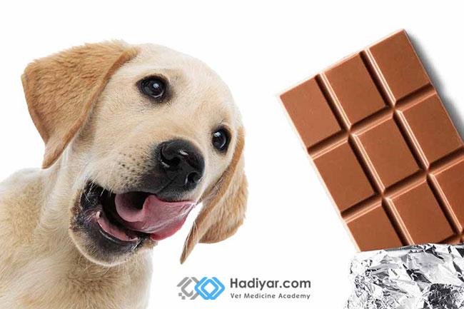 مشکلات ناشی از مصرف شکلات برای سگ و گربه