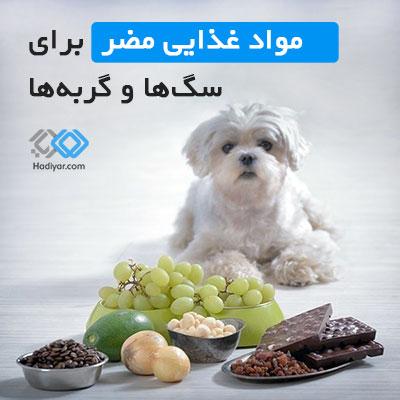غذاهای مضر برای سگ و گربه