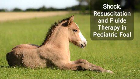 شوک و مایع درمانی در کره اسب
