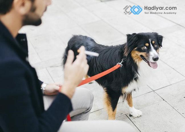 مشکلات ناشی از مصرف سیگار برای حیوانات خانگی