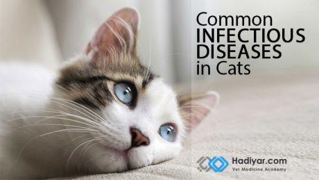 بیماری های عفونی شایع در گربه ها