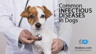 وبینار بیماری های عفونی شایع در سگ ها