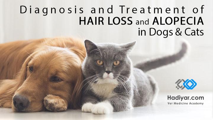 ریزش مو و کچلی در سگ و گربه