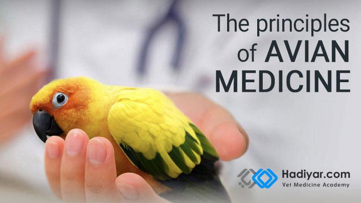 اصول طب پرندگان زينتی
