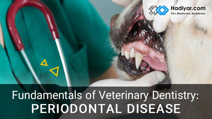 اصول دندانپزشکی در حیوانات کوچک