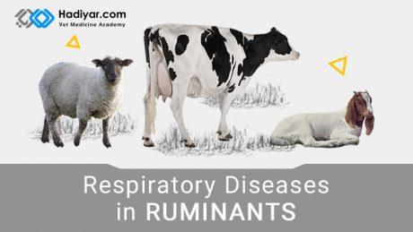 بیماری های تنفسی در نشخوارکنندگان