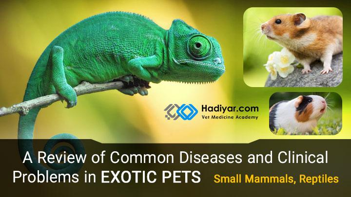 بیماری ها و مشکلات بالینی حیوانات اگزوتیک