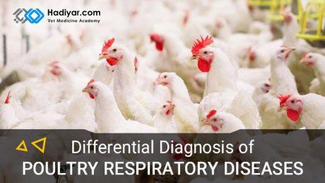 بیماری های تنفسی طیور