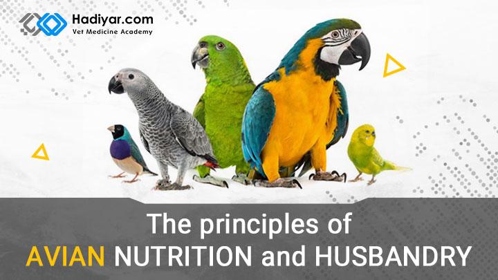اصول تغذیه و نگهداری از پرندگان خانگی