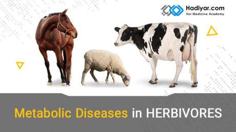 بیماری های متابولیک در علف خواران