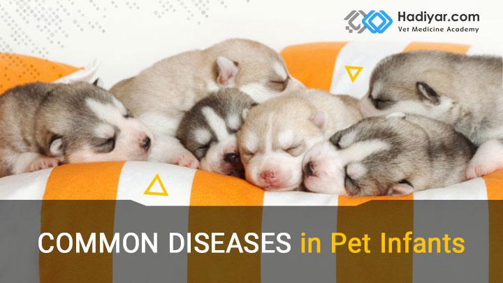 بیماری شایع در نورادان حیوانات خانگی