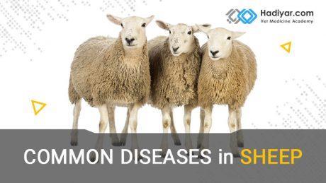 دوره آموزشی بیماری های گوسفند