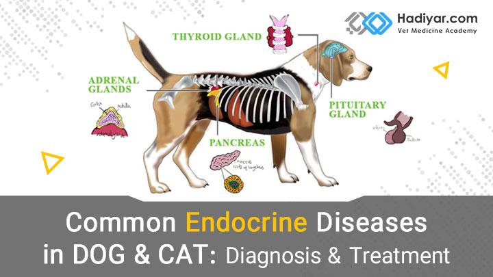 بیماری های اندوکراین در سگ و گربه