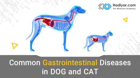 بیماری های شایع دستگاه گوارش سگ و گربه