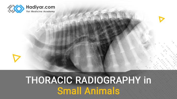 رادیوگرافی قفسه سینه ای در حیوانات کوچک