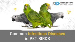 بیماری های عفونی شایع در پرندگان خانگی