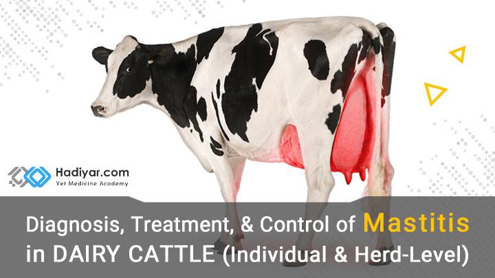 تشخیص، درمان ورم پستان در گاو شیری