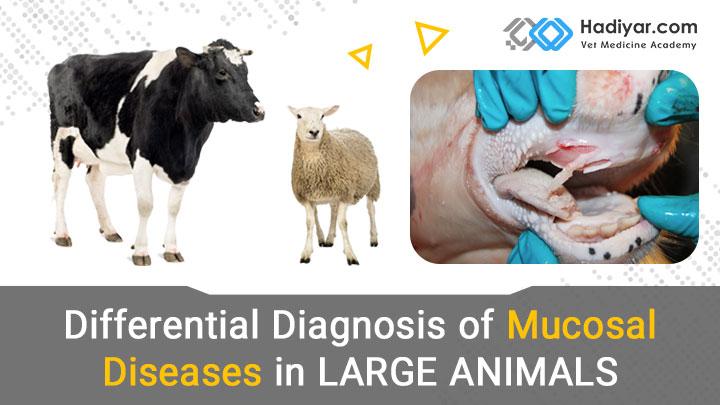 بیماری های مخاطی در دام های بزرگ
