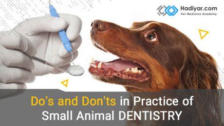 باید ها و نبایدها در طبابت دندانپزشکی حیوانات خانگی