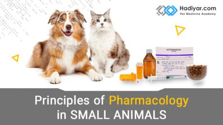 اصول فارماکولوژی در حیوانات کوچک