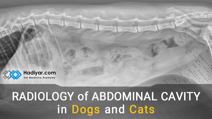 رادیولوژی محوطه بطنی در سگ و گربه