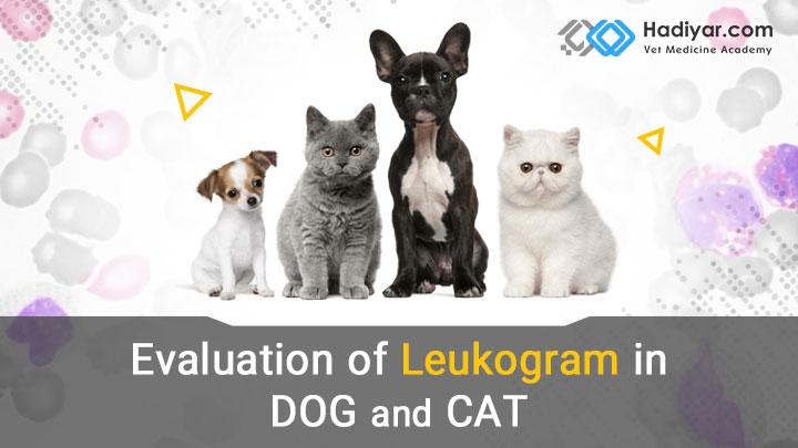 تفسیر لوکوگرام در سگ و گربه