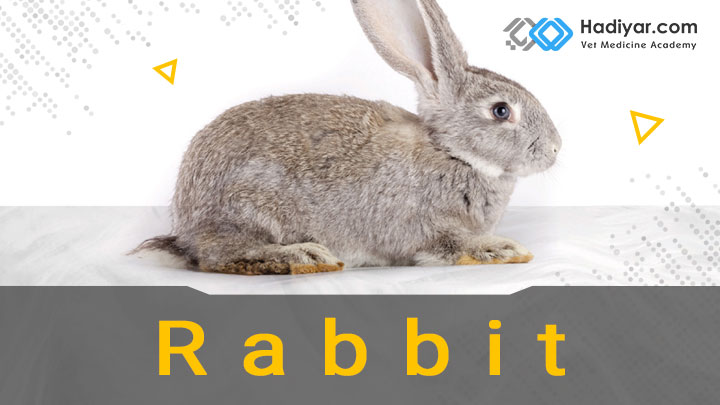 بیماری های شایع در خرگوش