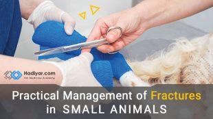 شکستگی در حیوانات کوچک