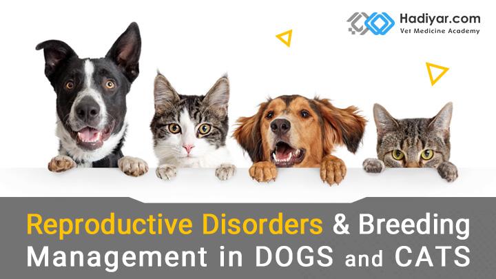 اختلالات تناسلی در سگ و گربه
