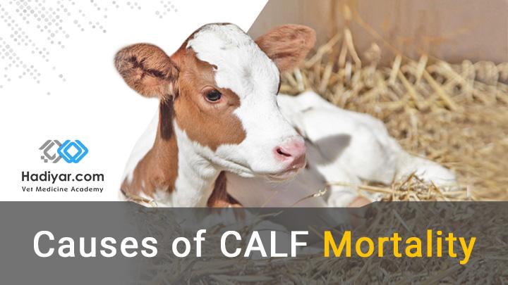 علل مرگ و میر گوساله ها از اووسیت تا از شیر گرفتن