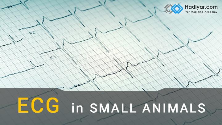 الکتروکاردیوگرافی در طب دام های کوچک