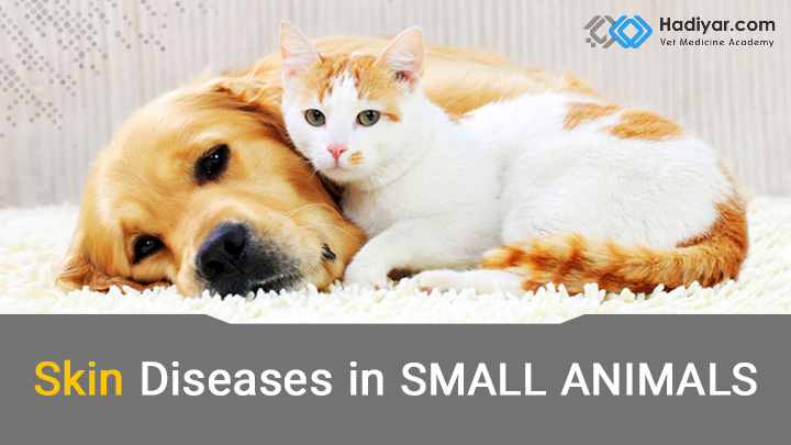 بیماری های پوستی در حیوانات خانگی