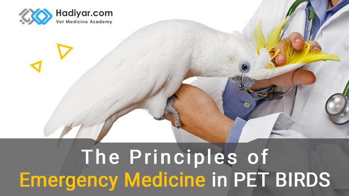 طب اورژانس در پرندگان زینتی