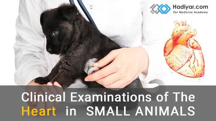 معاینه بالینی قلب در حیوانات کوچک